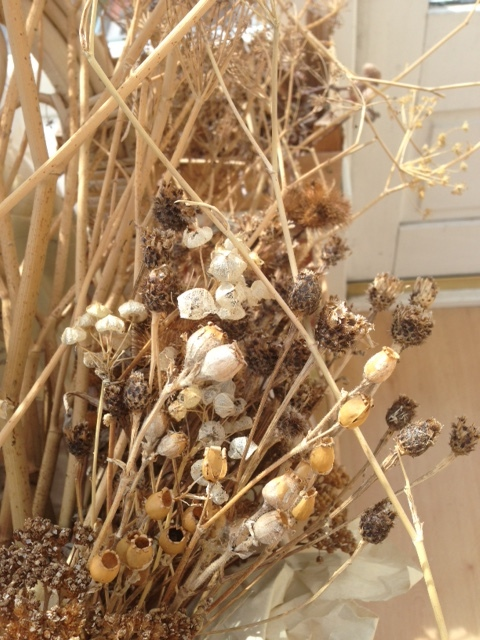 Dried Seed Pods - Gift Frippery