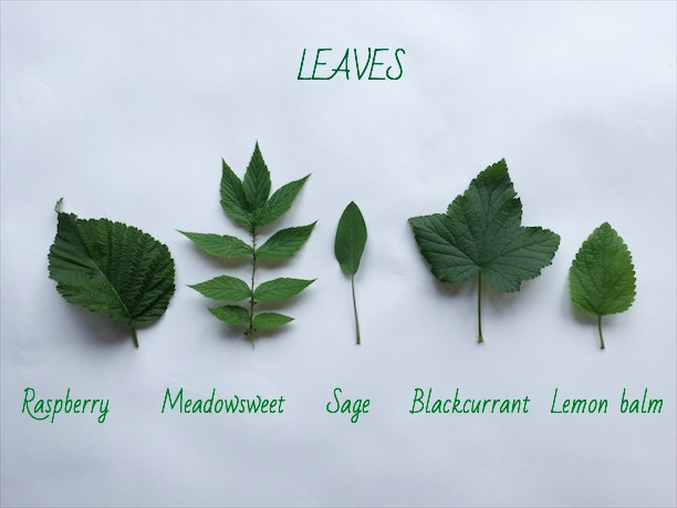 BECKY STANLEY - LEAVES