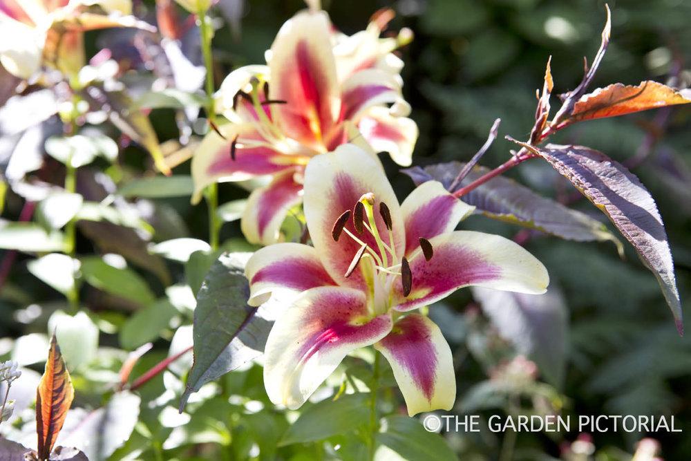 BackGdn, plant detail a8  copy.jpg