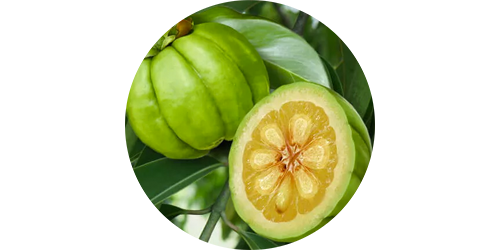 drop-down_green-garcinia-cambogia.png