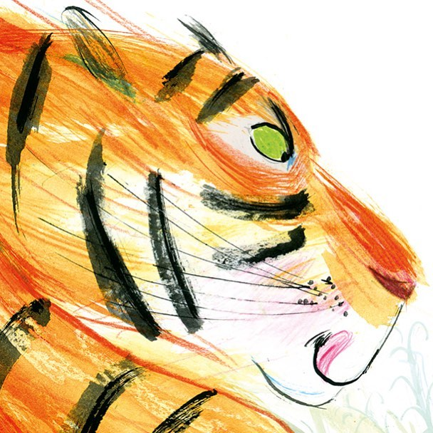 A hungry tiger. From 'Quick, Barney, RUN!' By @pip.jones.author and me. . . . . #tiger #tigerdrawing #childrensbooks #childrensillustration #inks