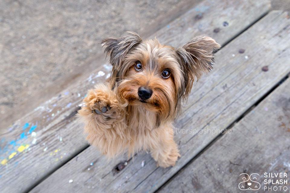 dog_waving.jpg