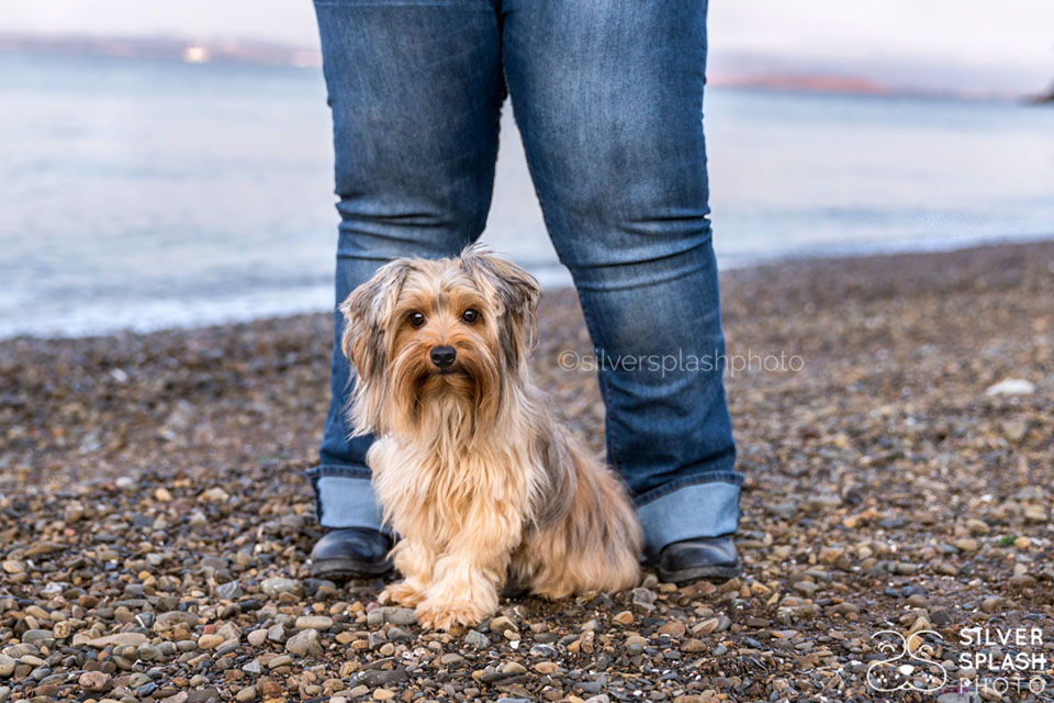 cute_dog_owners_legs_marin.jpg