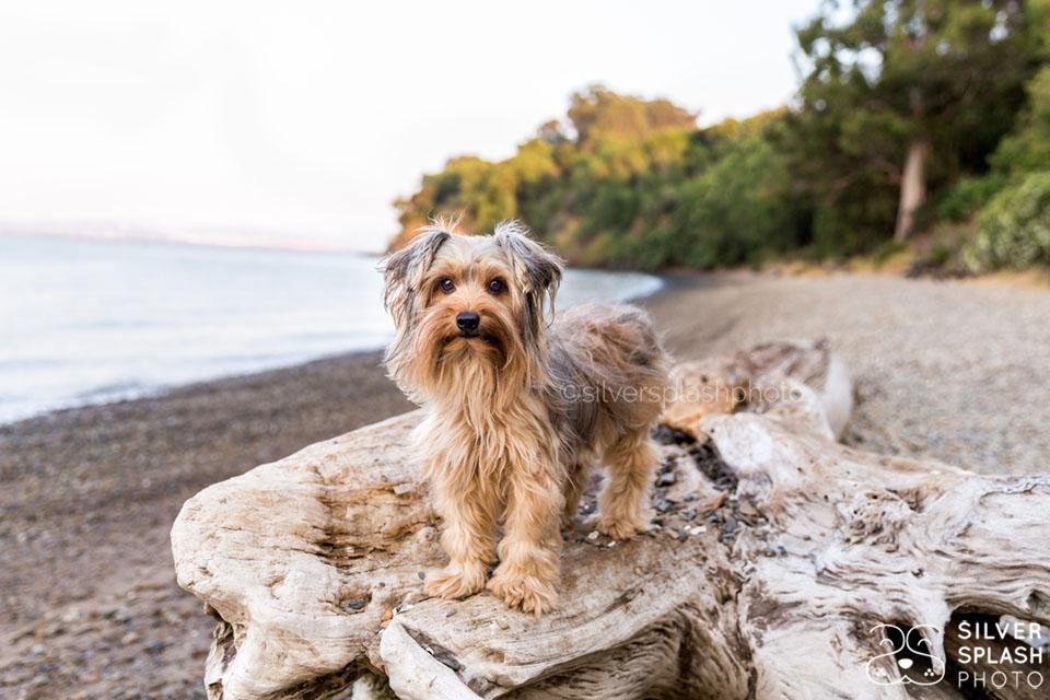 dog_photo_sesson_shoreline.jpg