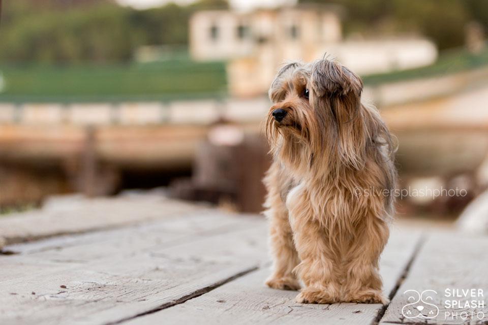 little_dog_boat_dock.jpg