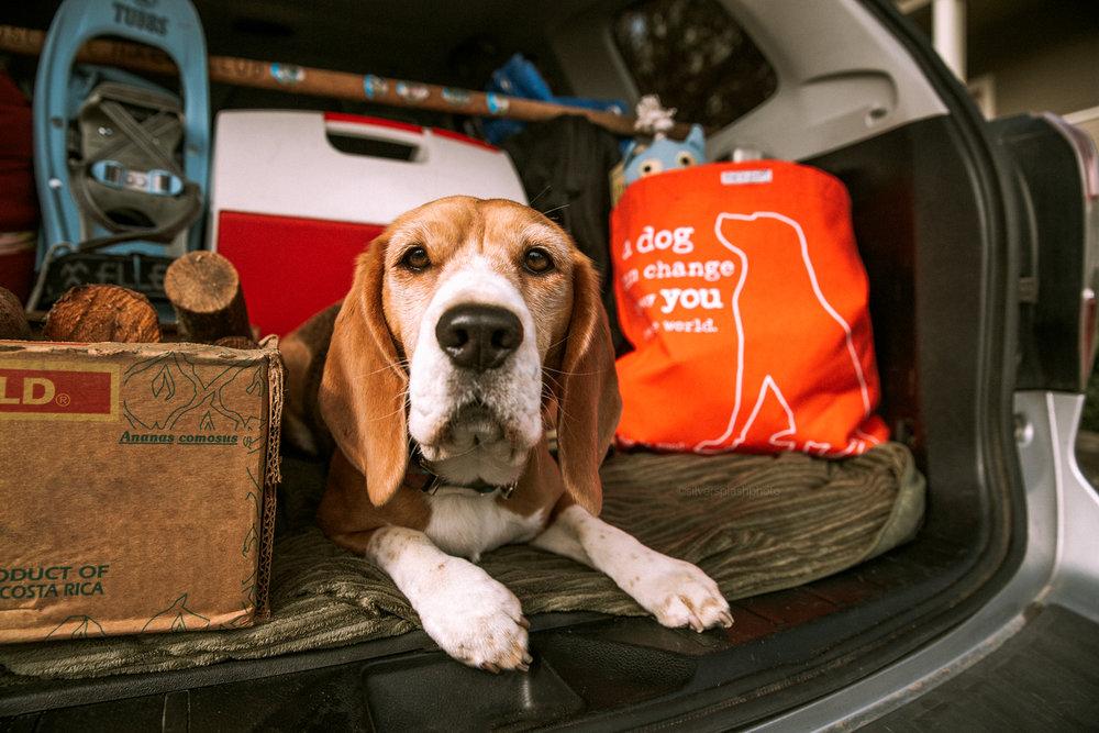 commercial-dog-photographer-san-francisco.jpg