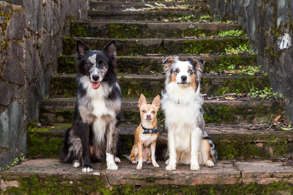 SilverSplashPhoto.com-three-dogs-wm.jpg