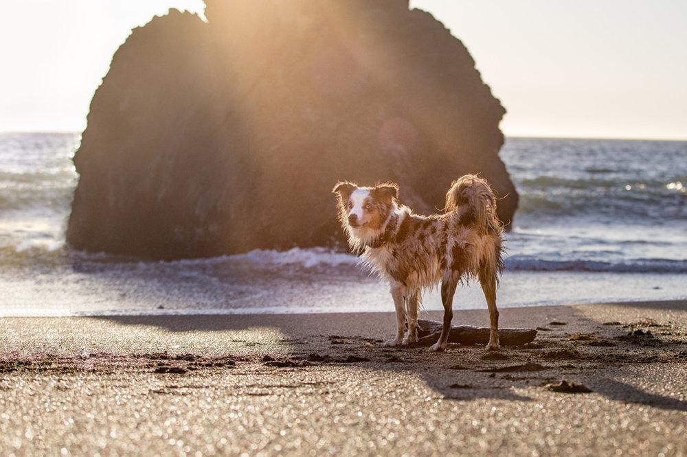 SilverSplashPhoto-beach.jpg