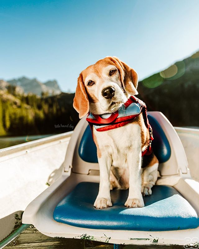 One of my favorite images I shot for Kurgo this Summer, featuring my beagle Splash. ❤️