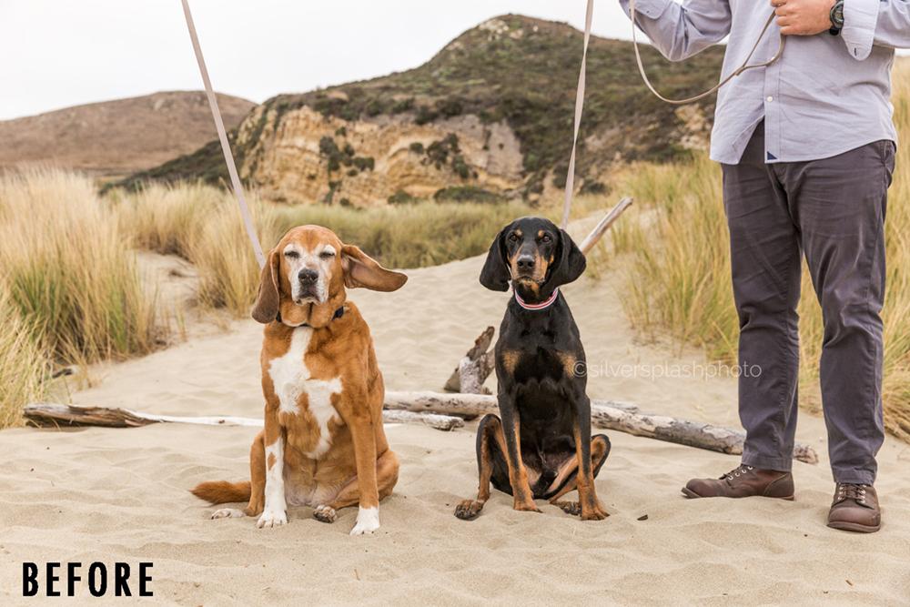 Hound-dog-photographer-before-wm-SM.jpg