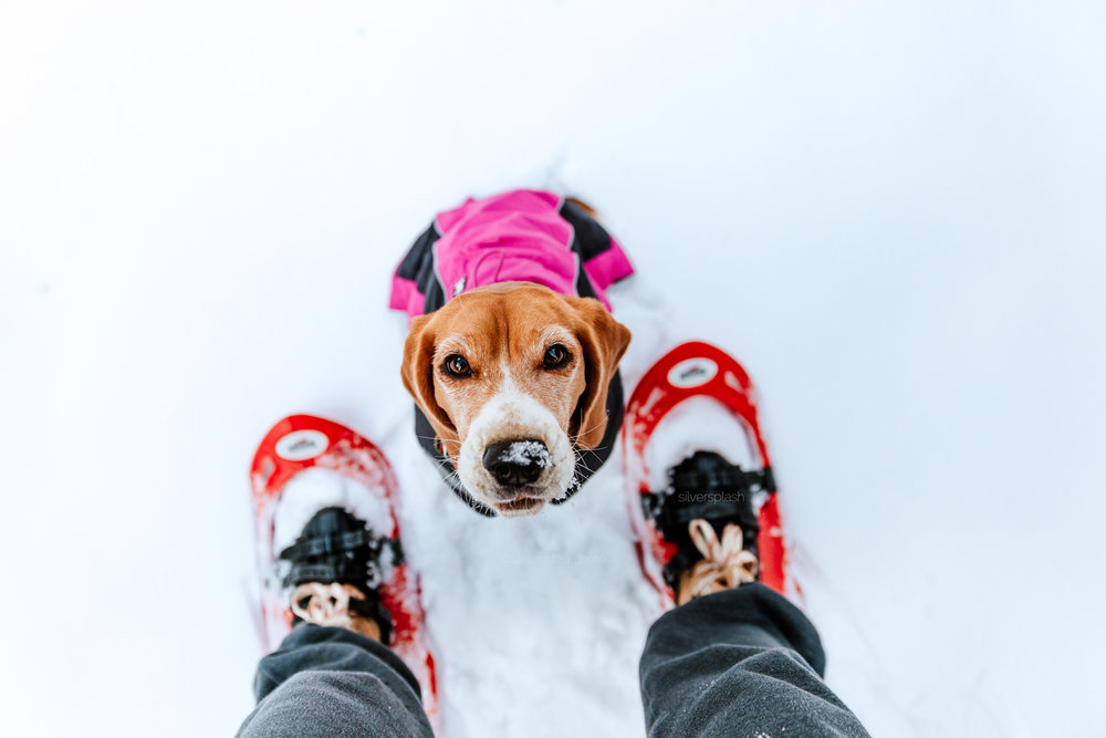 Commercial-pet-photography-snowshoe.jpg