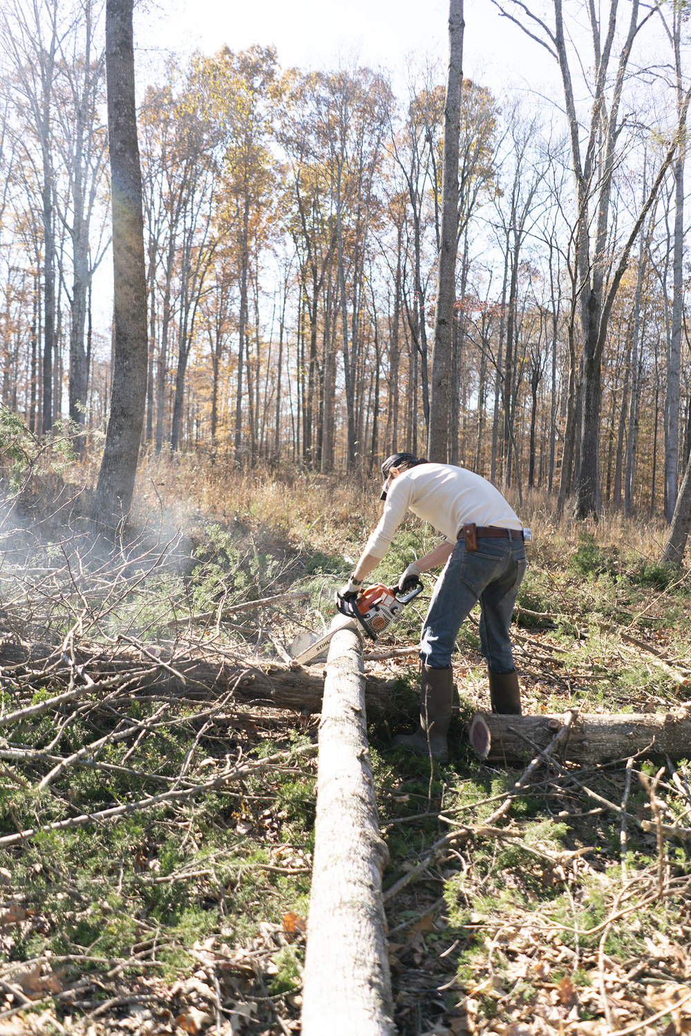 cutting down trees nashville lifestyle photography.jpg