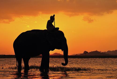 elephantrider