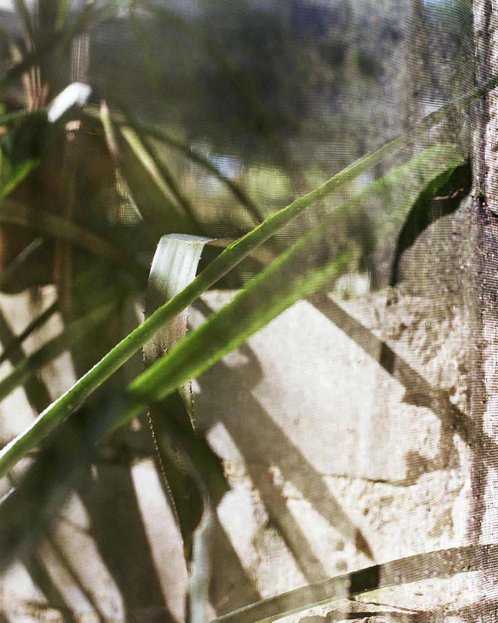 """Lorna Bauer,  Aloe , édition de 5 + 1 AP, 2018, impression pigmentée, 127 x 102 cm (50"""" x 40"""")"""