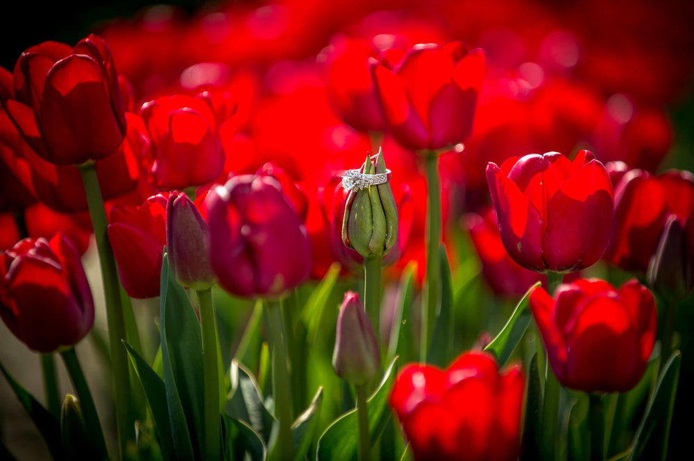 tulips-wedding-ring.jpg