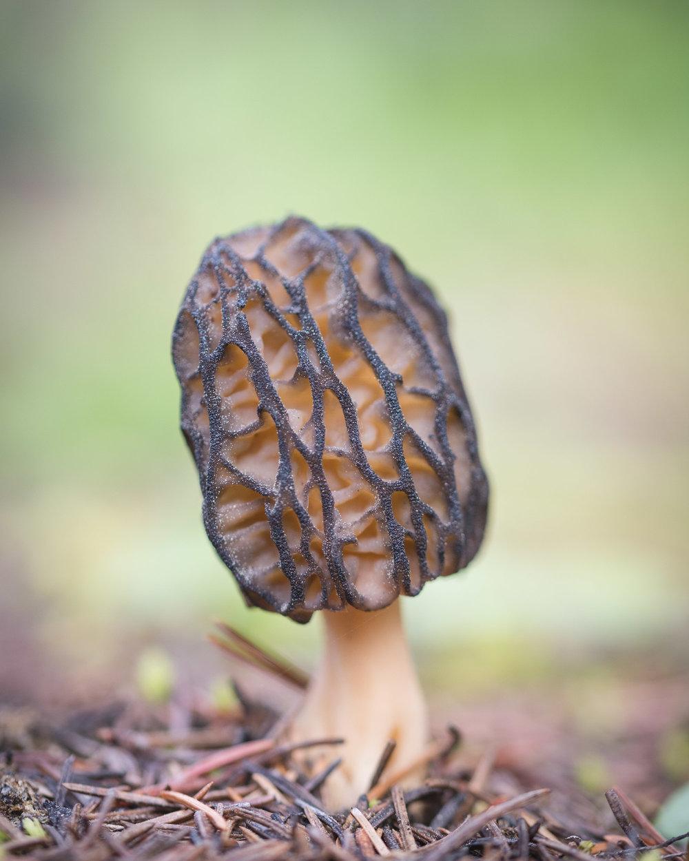 Fungi-14.jpg