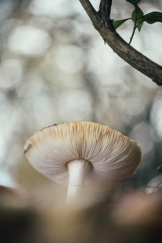 Fungi-39.jpg