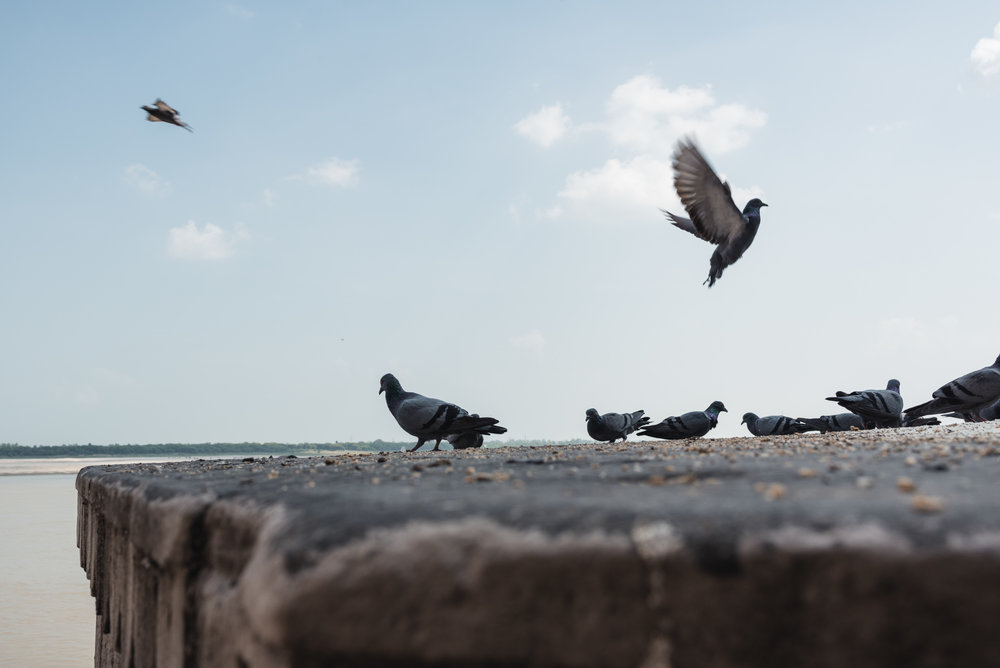 Pigeons at Munshi Ghat, Varanasi