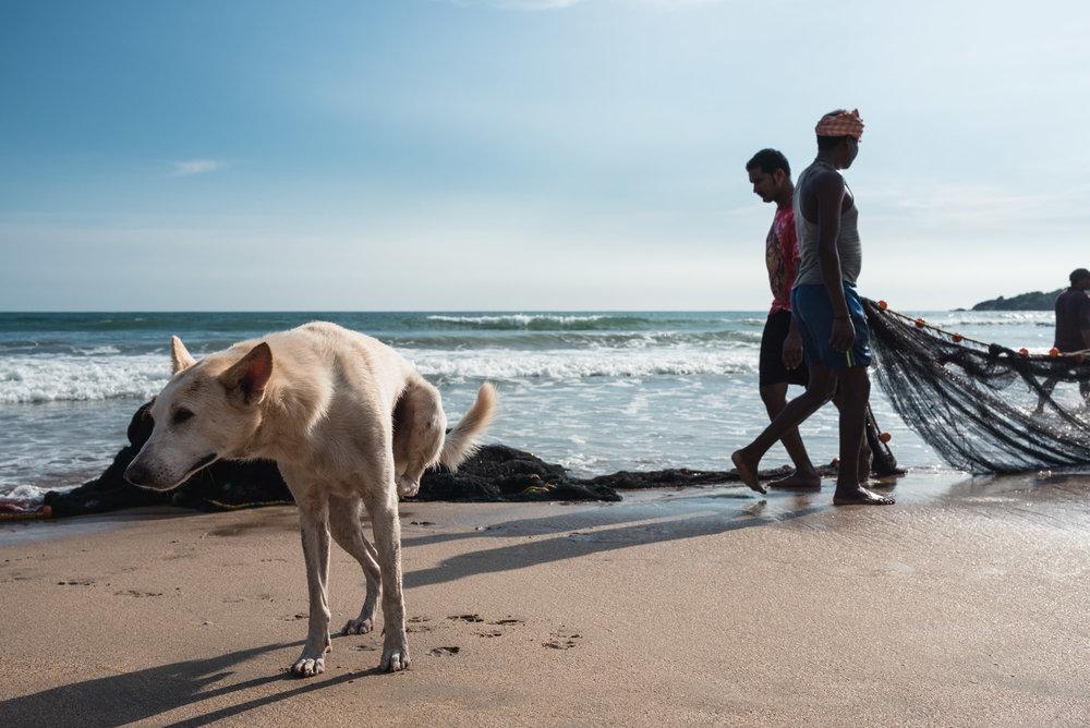 Dog and fisherman at Palolem Beach, Goa