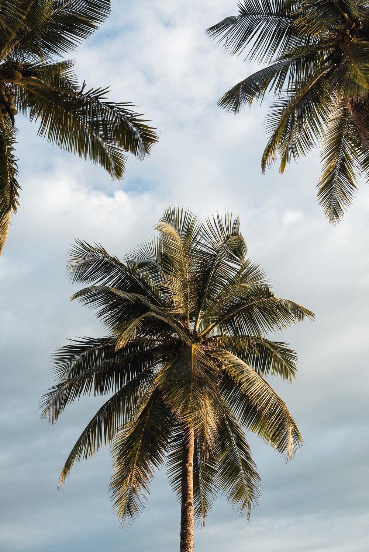 Palm tree at Palolem Beach, Goa