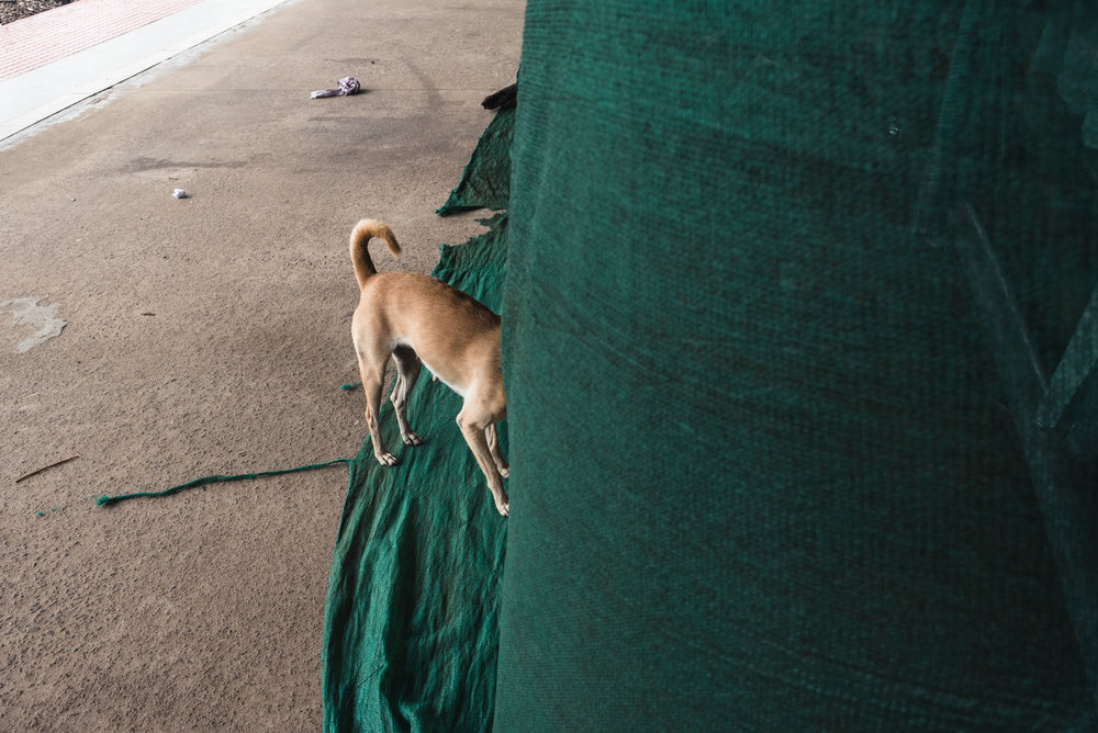 Street dog at Alleppey railway station
