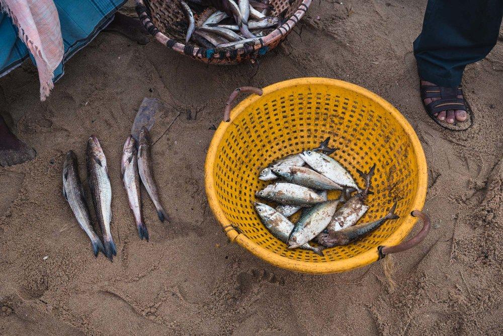 Fish for sale at Christian Fishing Village, Varkala