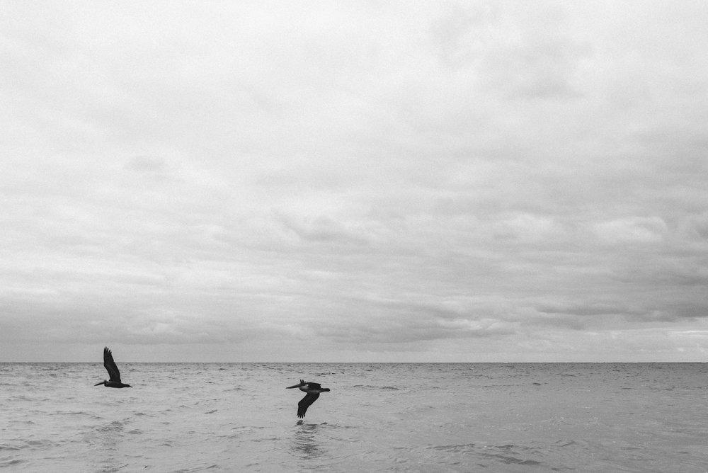 Pelicans flying over ocean