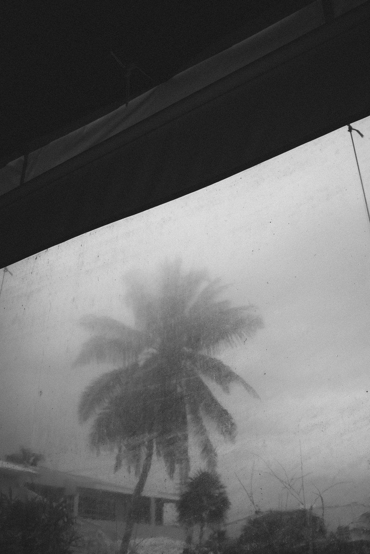 Palm tree through plastic