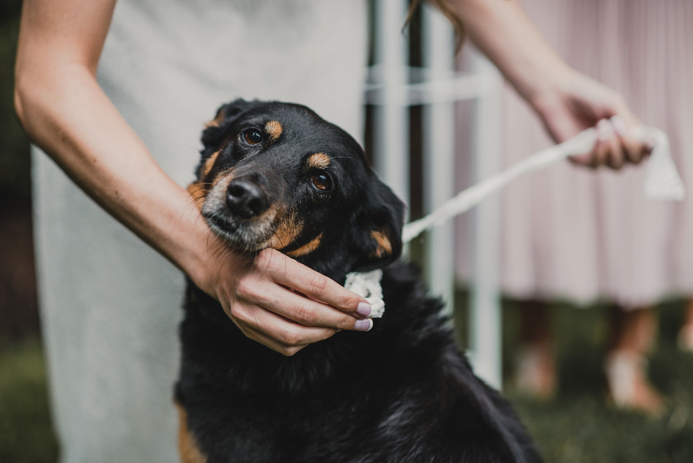Family dog brings ring to Bride and Groom