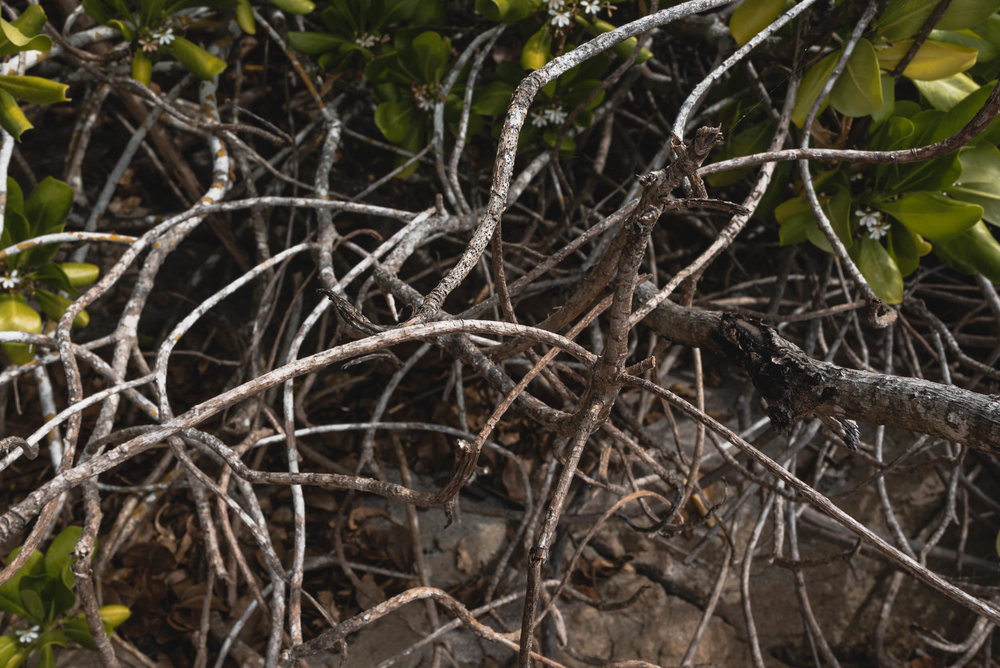 Beach shrubbery