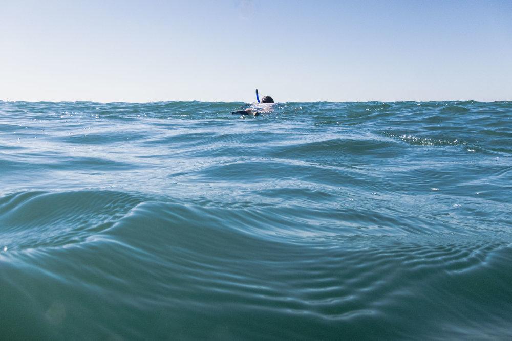 Punta Mita snorkeling