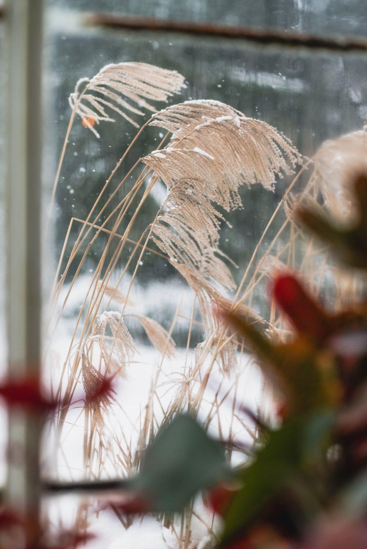 Snowy weather through conservatory window