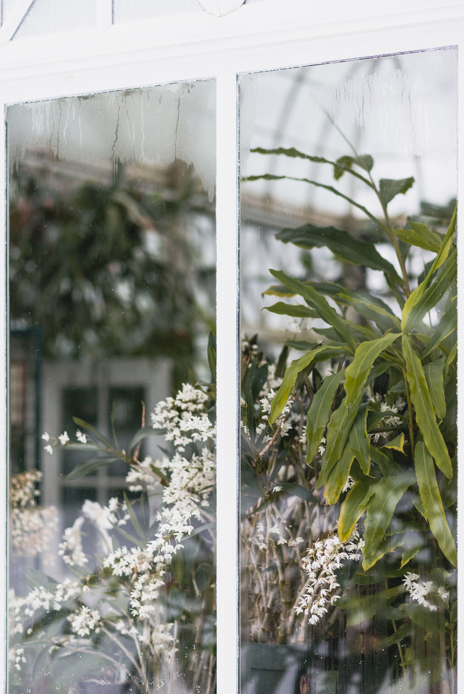 Plants through conservatory window