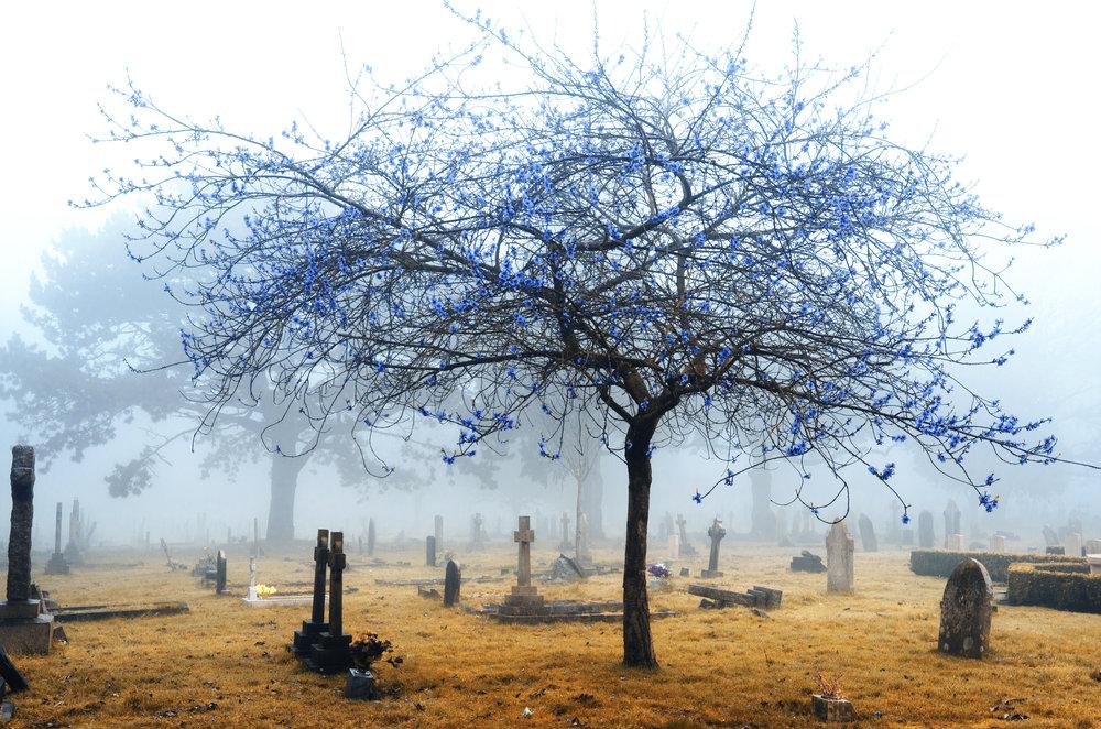 infrared-foggy-cemetery-P4JWZLJ.jpg