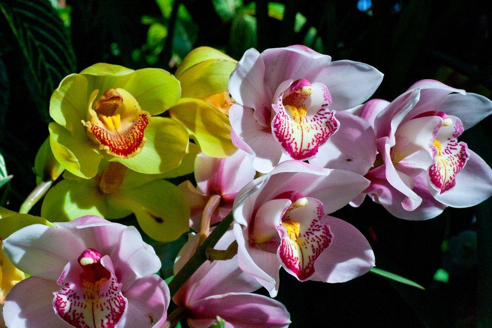 Orchids at the Balboa Park Botanical Building.