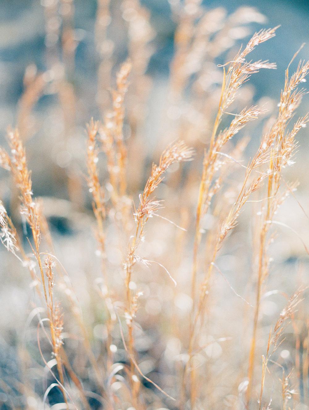 grass (1 of 1).JPG