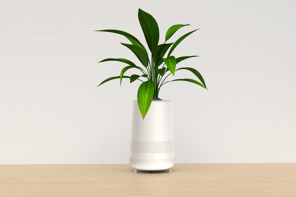 Sol_Plant_Wood.jpg