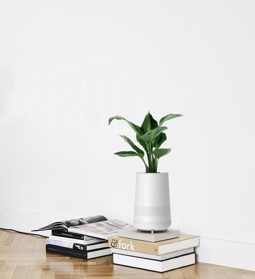 Sol_Plant_Book.jpg