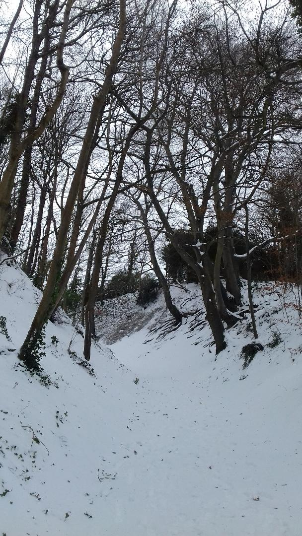 Andy Hay Trees.jpg