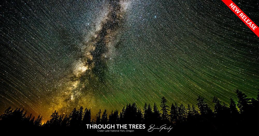 Through the Trees - BrianGailey.com