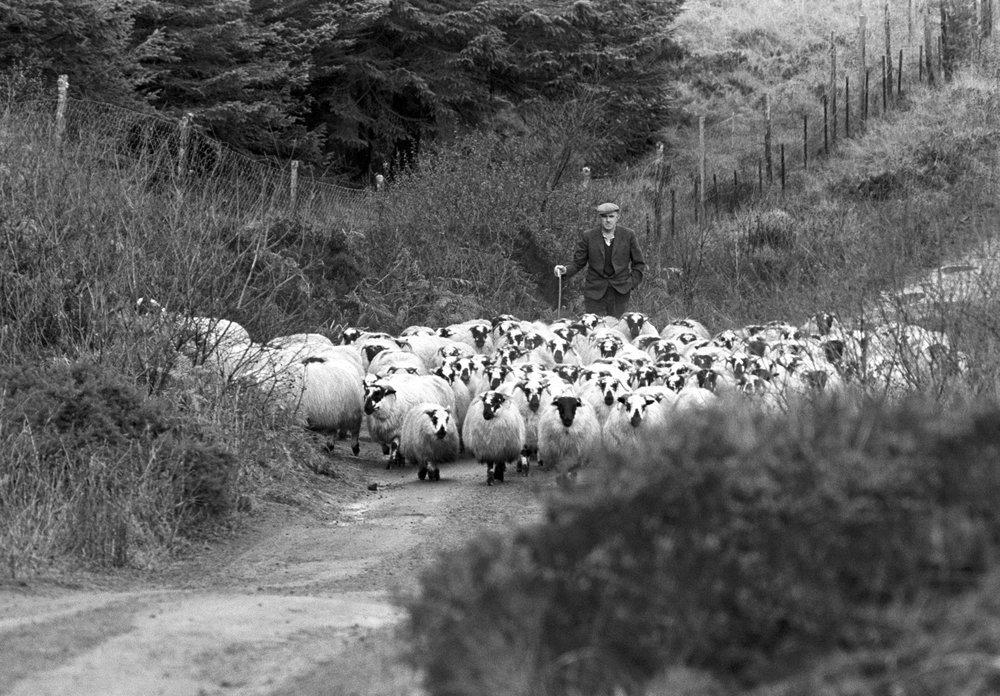 shepherd & flock.jpg