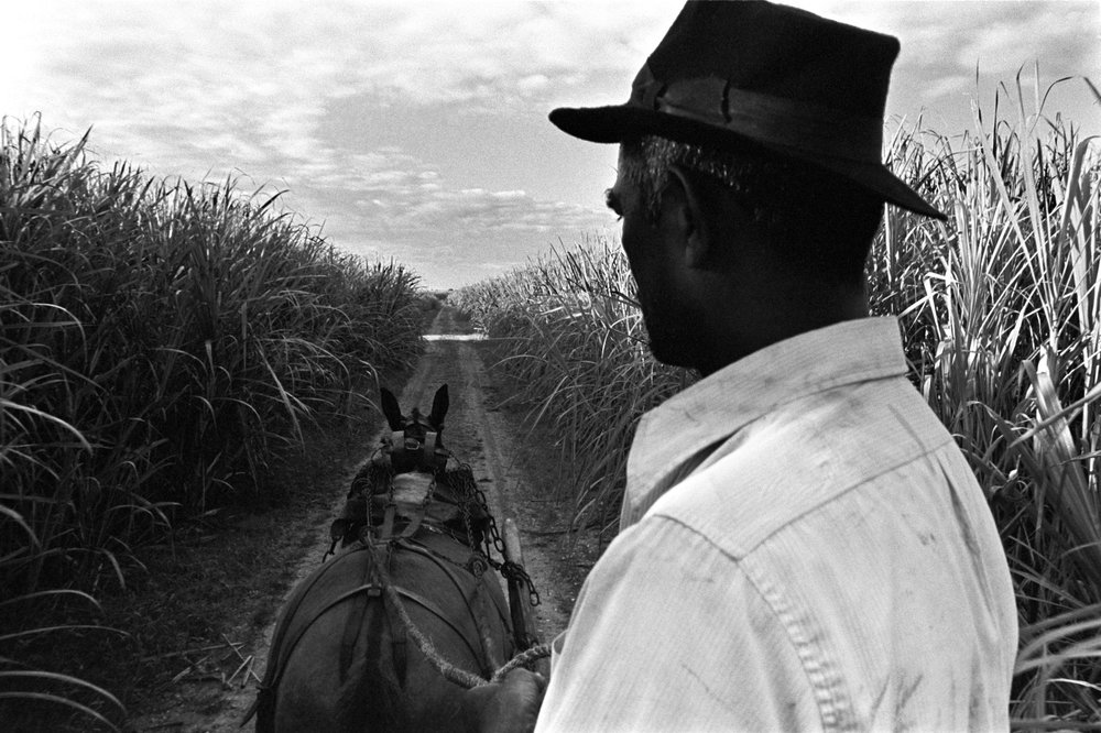 Sonny in cane fields, Trinidad 1973