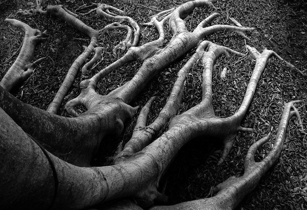 Banyon roots.jpg