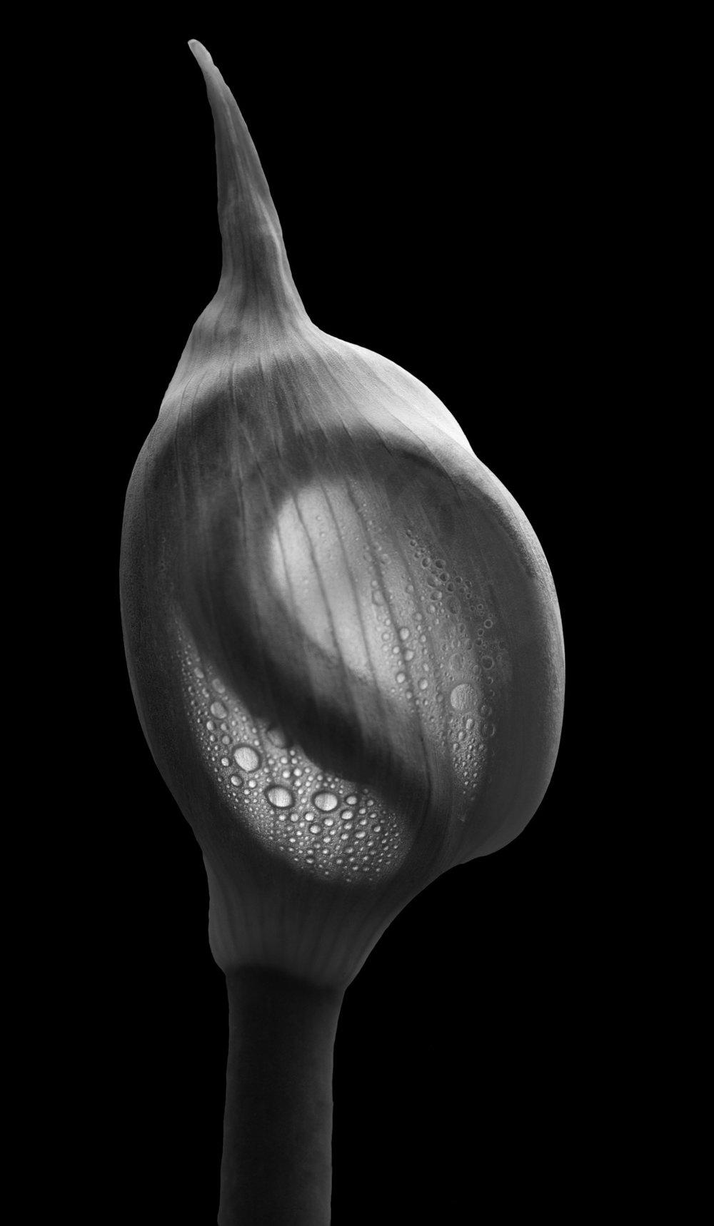 dewy onion fetus.jpg