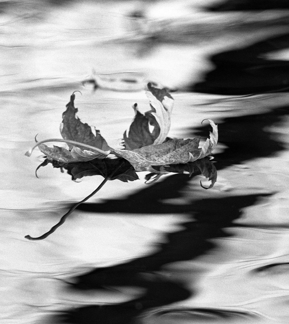 floating leaf.jpg