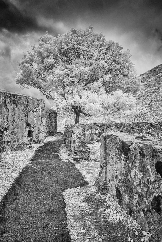 Annaburg  tree HDR.jpg
