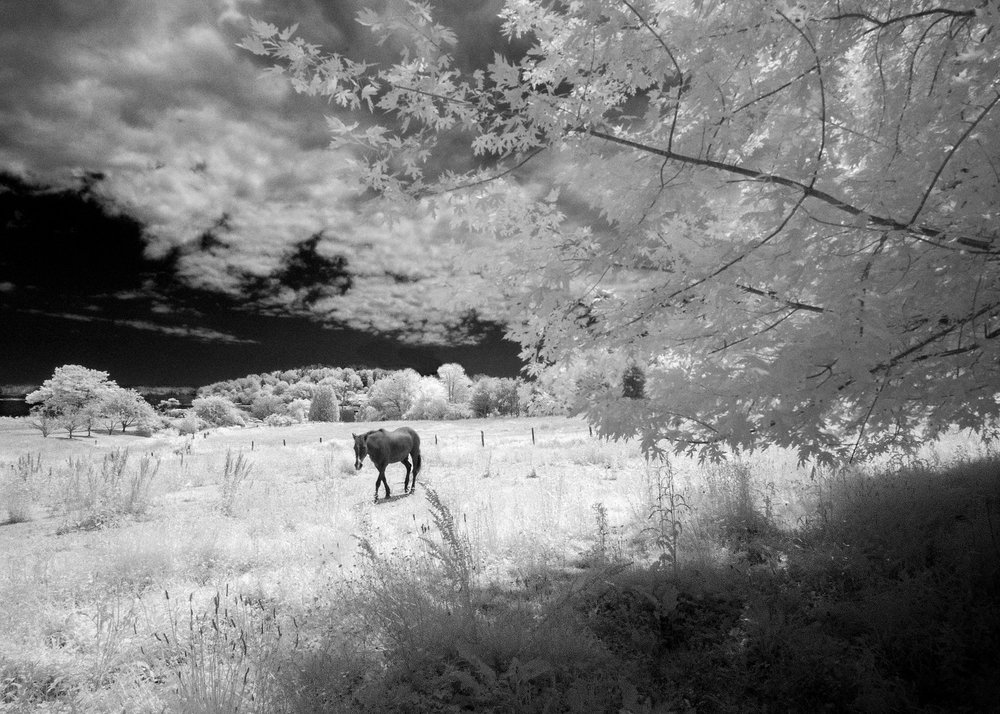 Martin Pt horse edit.jpg
