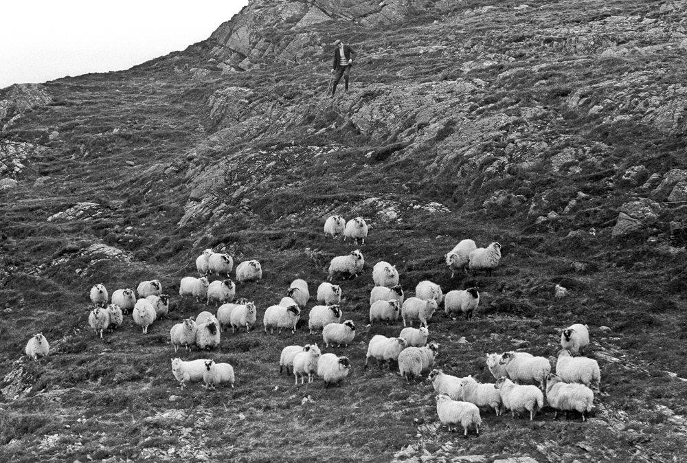 dapper shepherd.jpg