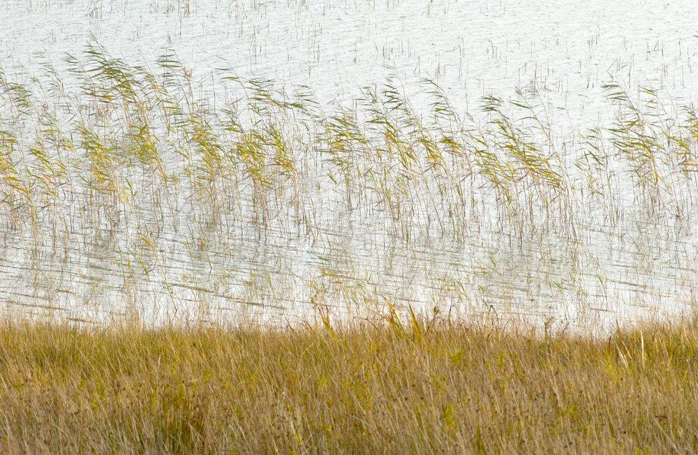 Mull reeds.jpg
