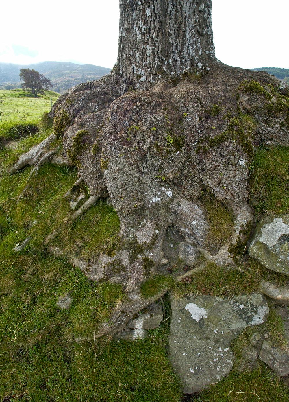 Rannoch hillside trees.jpg